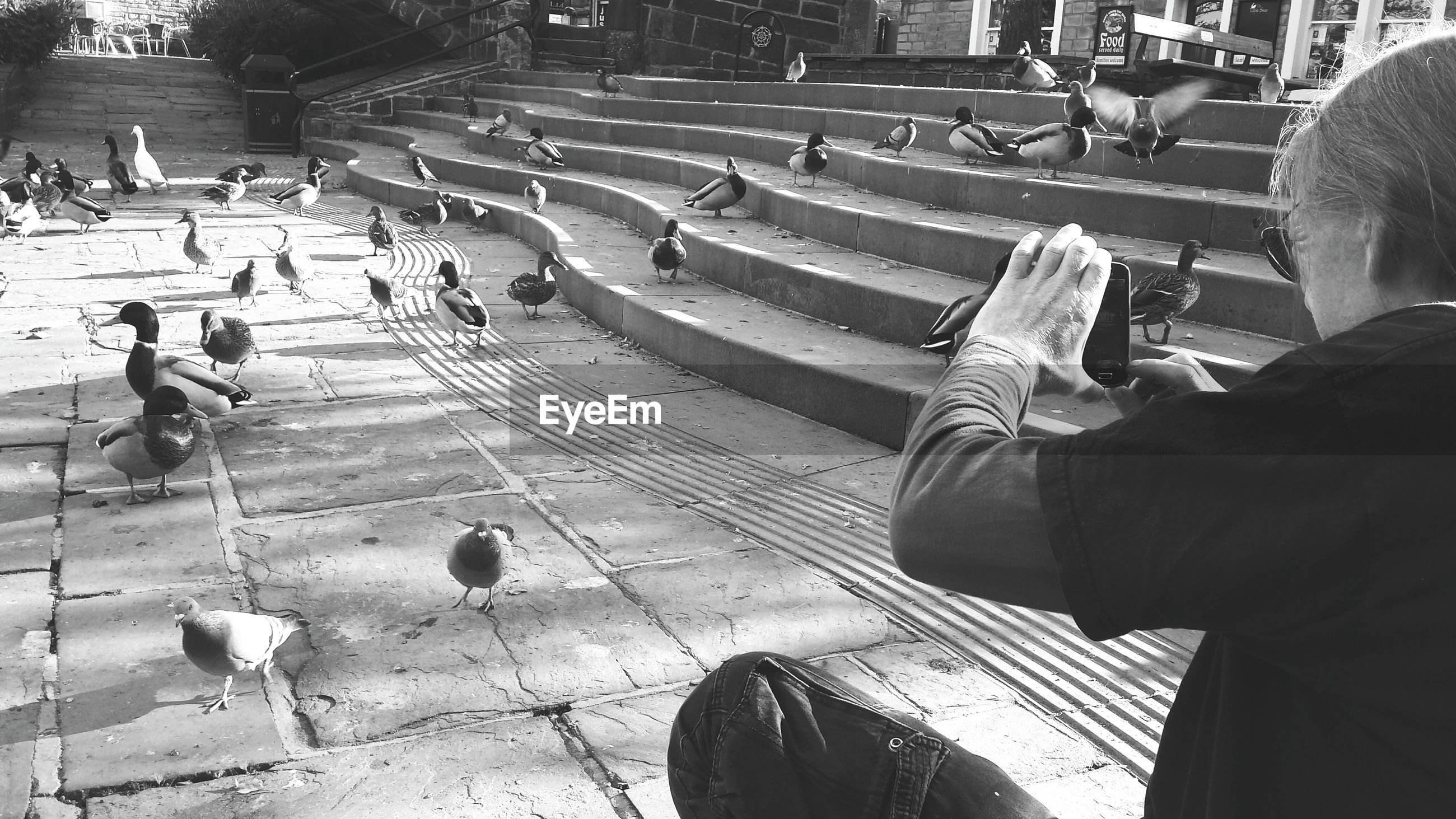 High angle view of man photographing ducks on field