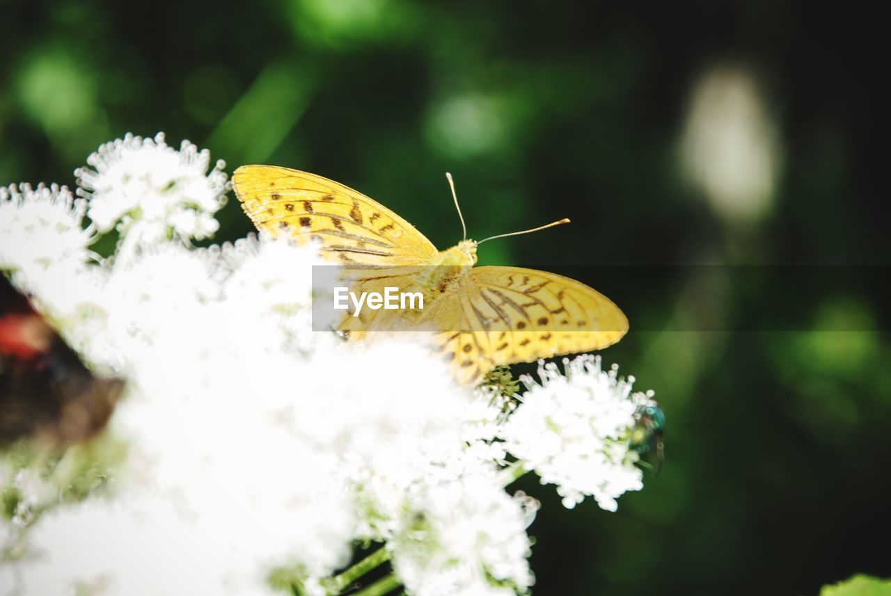 Insect Butterfly - Insect Flower Animal Wing No People Nature Outdoors Flower Head Fragility Nature Scenics Tranquility