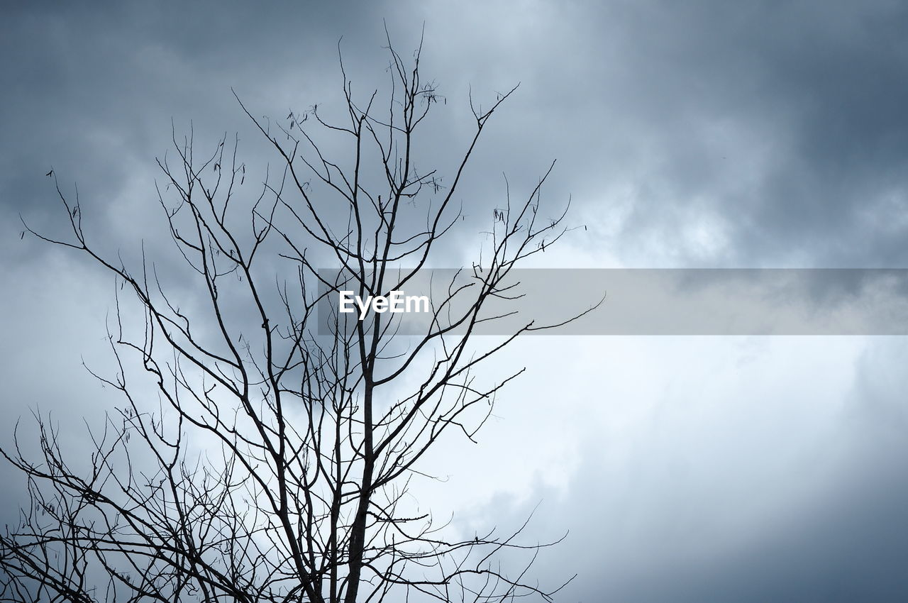 cloud - sky, sky, plant, bare tree, beauty in nature, nature, no people, tranquility, tree, low angle view, branch, day, growth, silhouette, outdoors, tranquil scene, scenics - nature, focus on foreground, overcast, dead plant