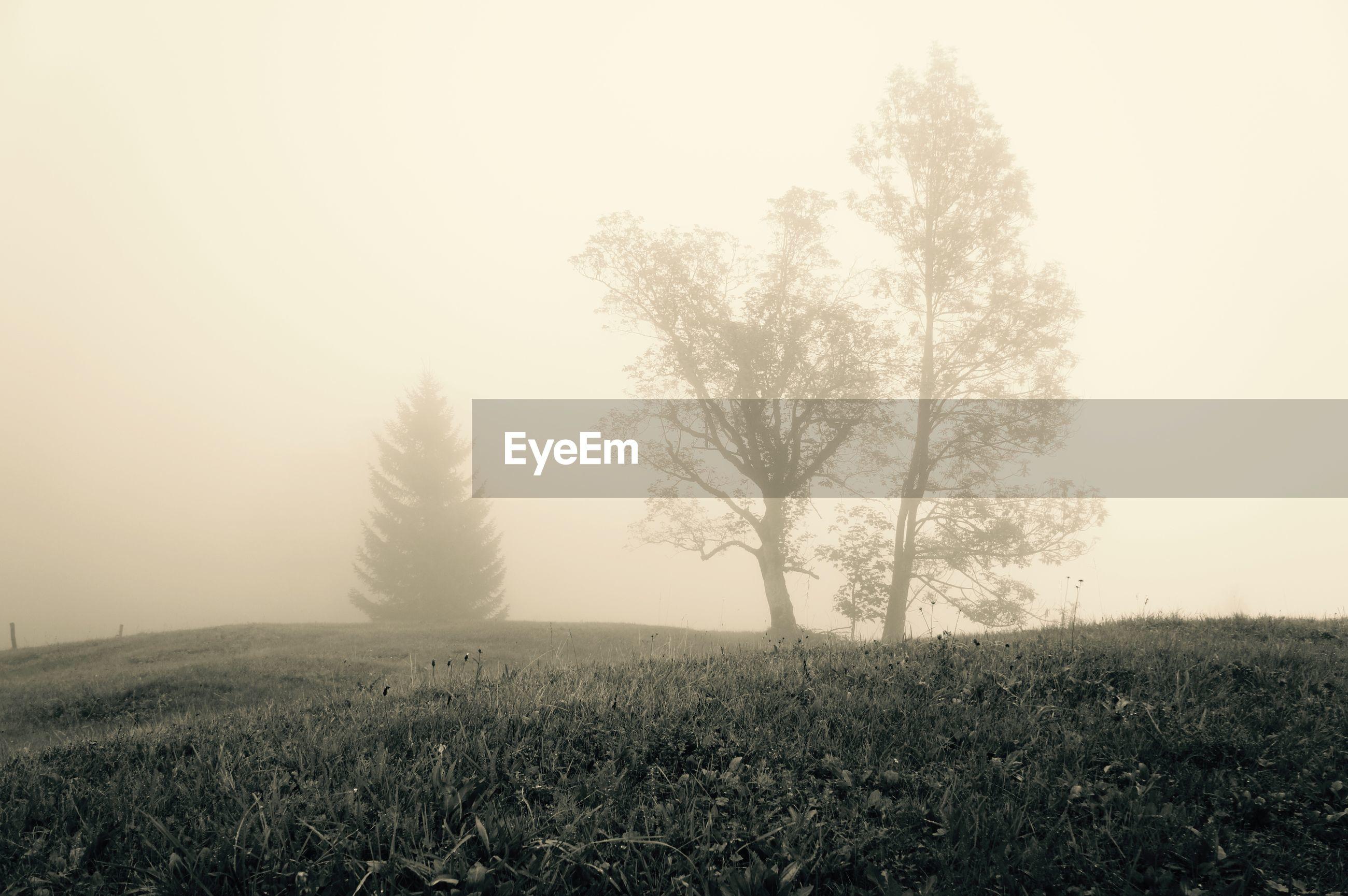 tranquility, tranquil scene, fog, tree, landscape, foggy, field, scenics, copy space, beauty in nature, nature, grass, bare tree, growth, non-urban scene, sky, grassy, solitude, remote