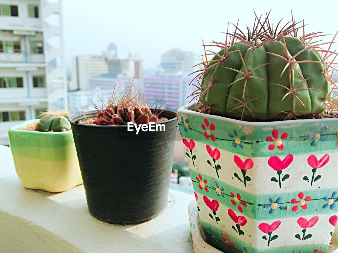 potted plant, focus on foreground, day, close-up, no people, green color, succulent plant, cactus, plant, nature, container, growth, freshness, outdoors, spiked, thorn, window, plant part, food and drink, food, flower pot, houseplant