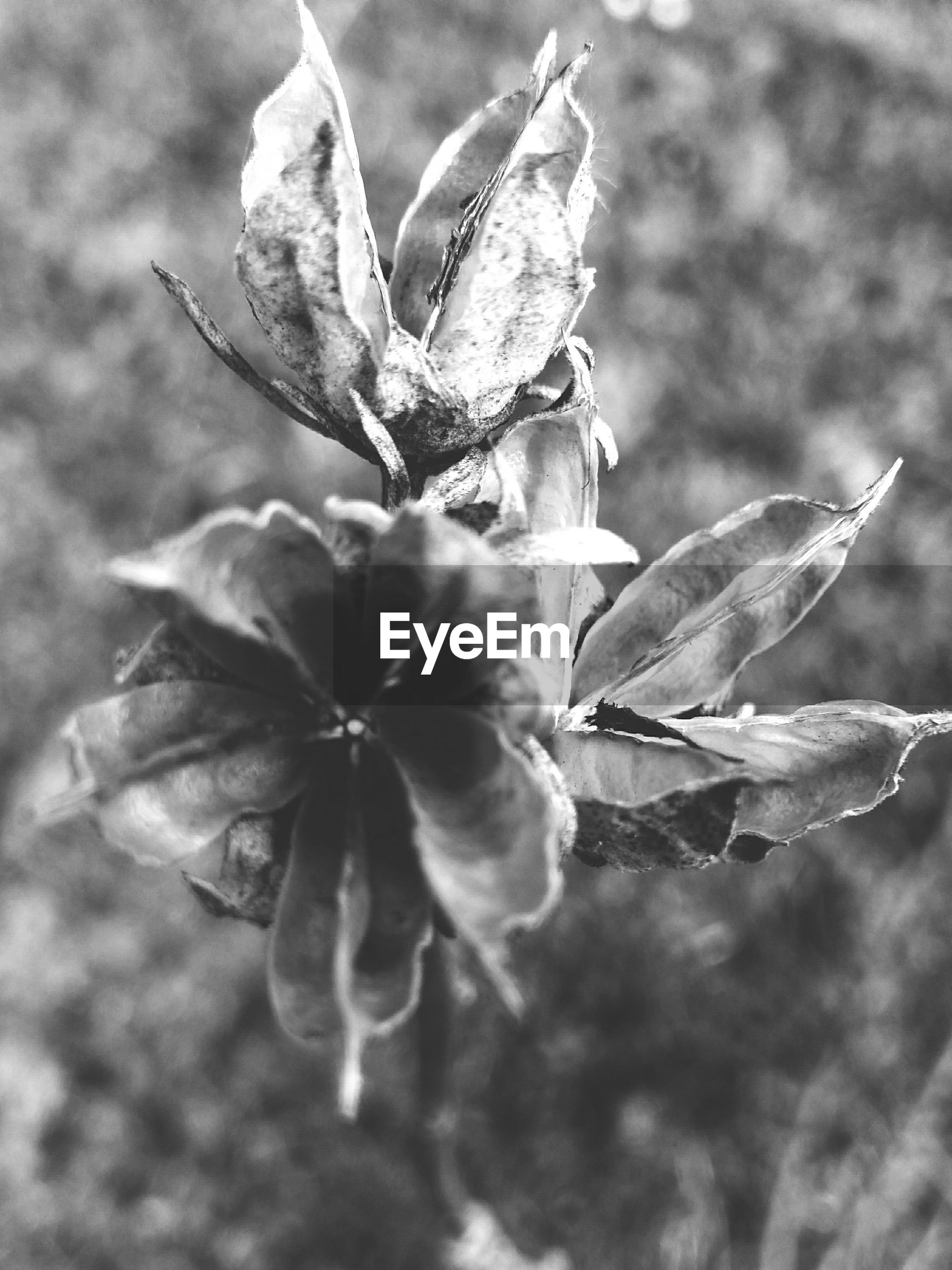 plant, growth, nature, leaf, flower, no people, outdoors, close-up, fragility, beauty in nature, day, flower head