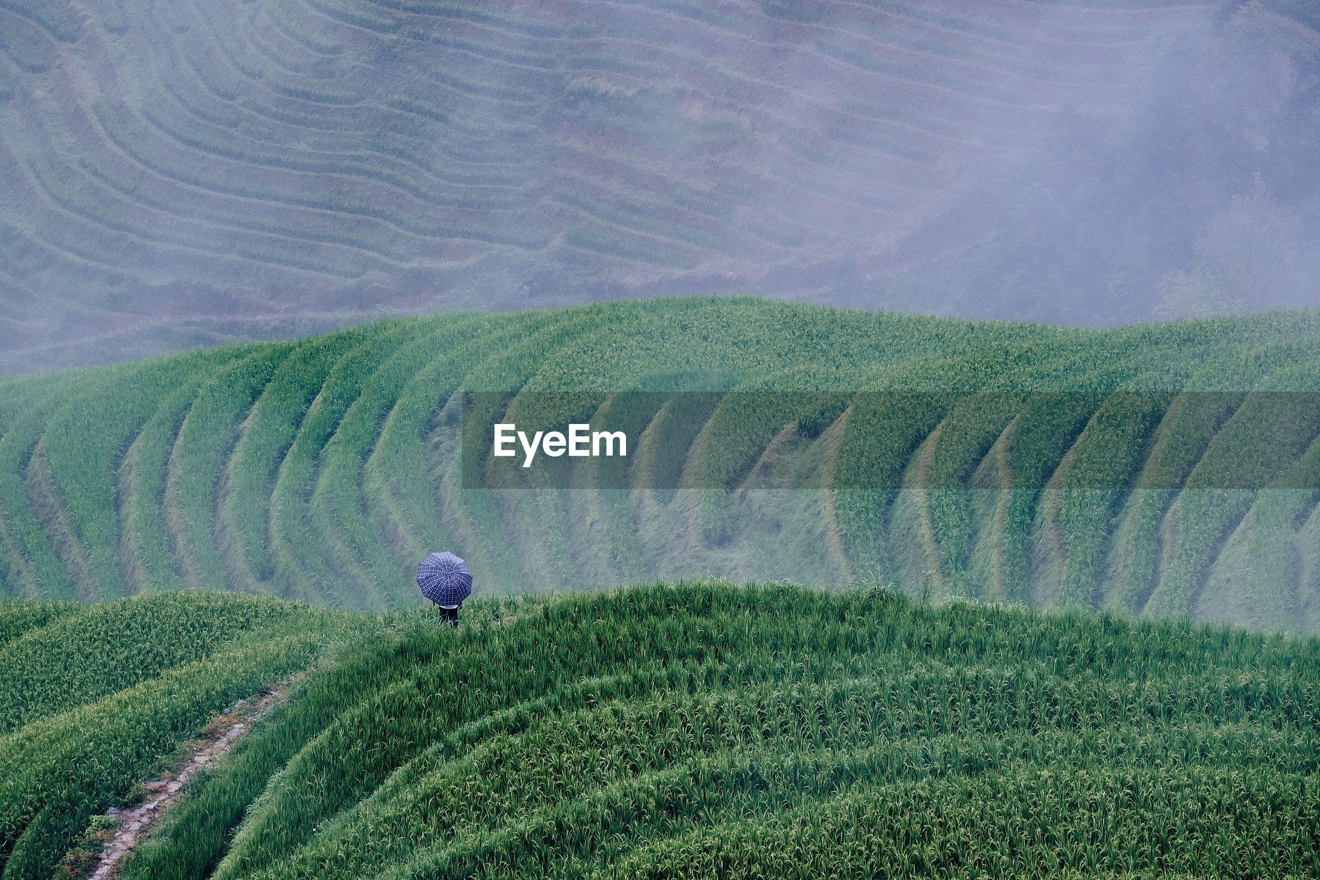 Person on tea crop field