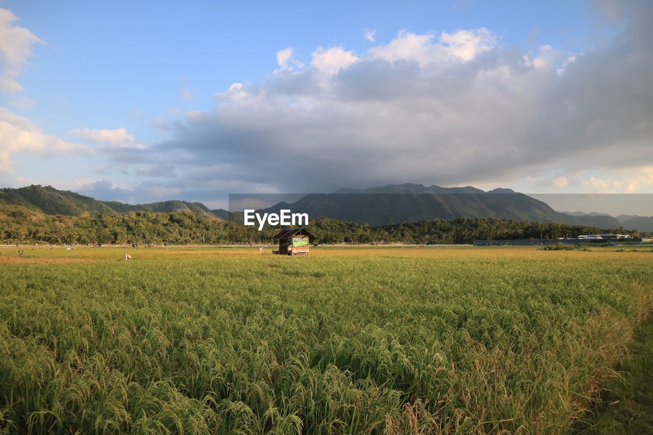 field, land, sky, environment, scenics - nature, cloud - sky, landscape, plant, beauty in nature, tranquil scene, agriculture, tranquility, rural scene, mountain, nature, growth, green color, farm, day, grass, outdoors, no people