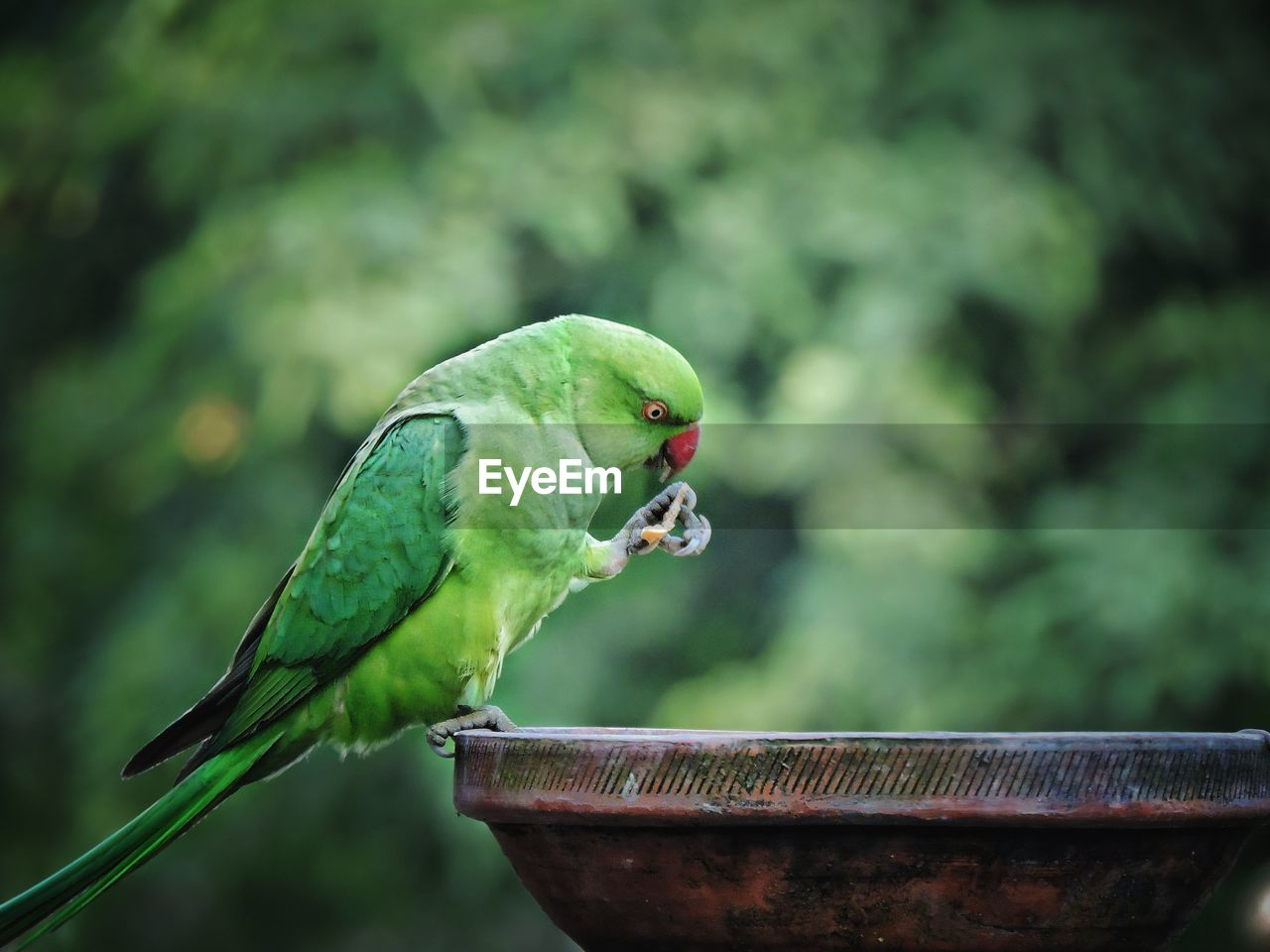 CLOSE-UP OF PARROT PERCHING ON A PLANT