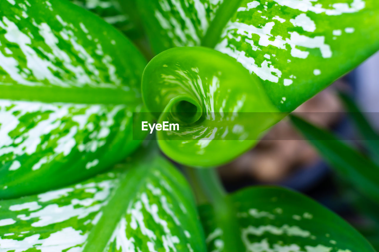 green color, close-up, plant, growth, no people, beauty in nature, leaf, nature, plant part, focus on foreground, day, freshness, selective focus, outdoors, food and drink, high angle view, food, natural pattern, pattern, vulnerability