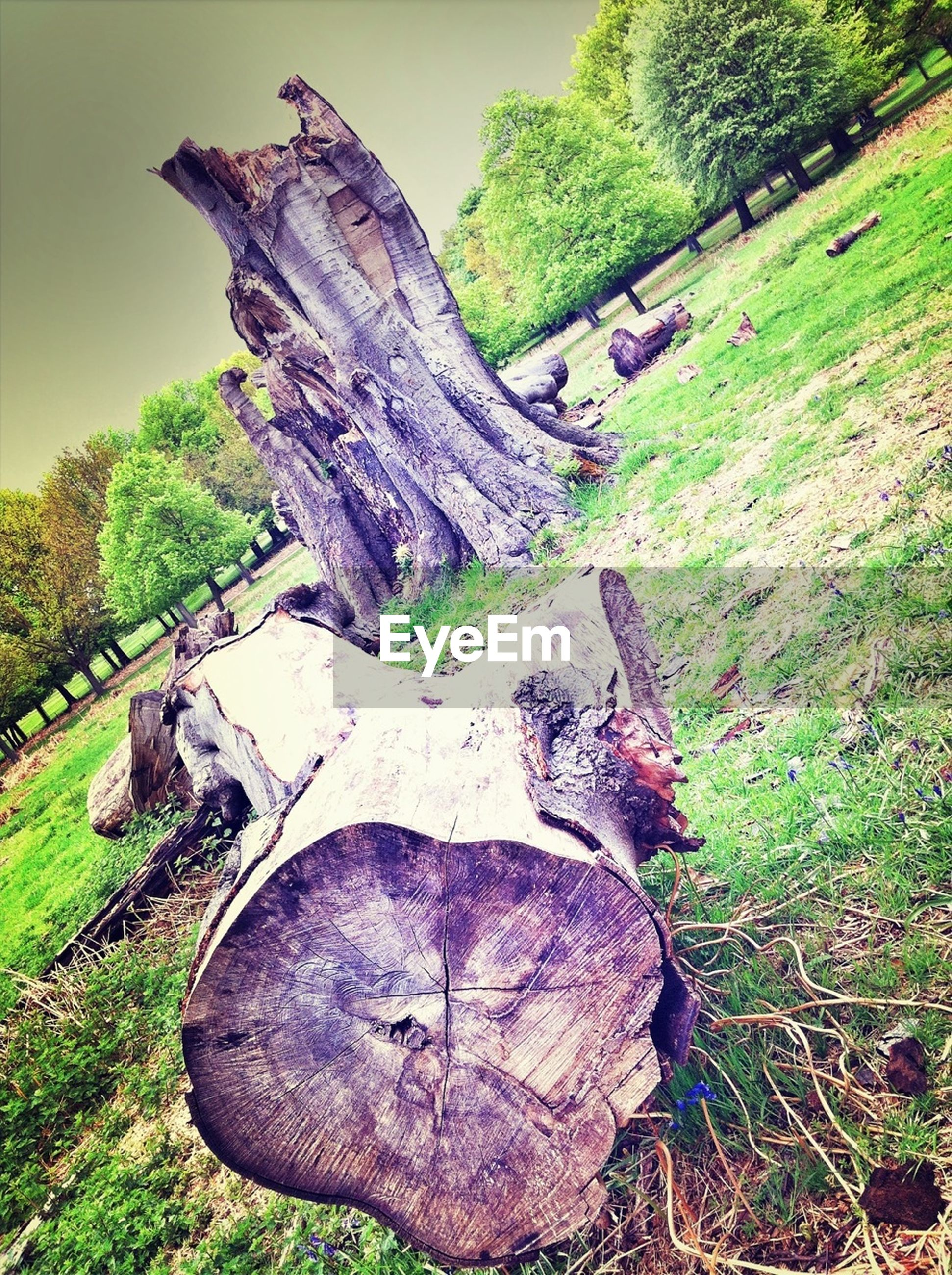 tree, tranquility, nature, tranquil scene, rock - object, scenics, landscape, beauty in nature, grass, growth, green color, non-urban scene, rock formation, plant, field, tree trunk, forest, day, outdoors, remote