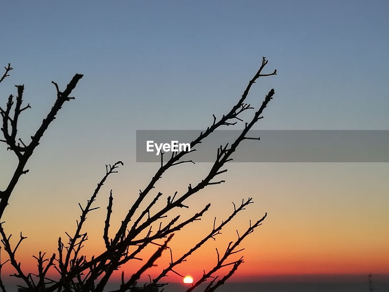sky, sunset, beauty in nature, silhouette, tranquility, plant, scenics - nature, tree, tranquil scene, nature, no people, bare tree, branch, orange color, clear sky, non-urban scene, outdoors, growth, idyllic, low angle view, dead plant