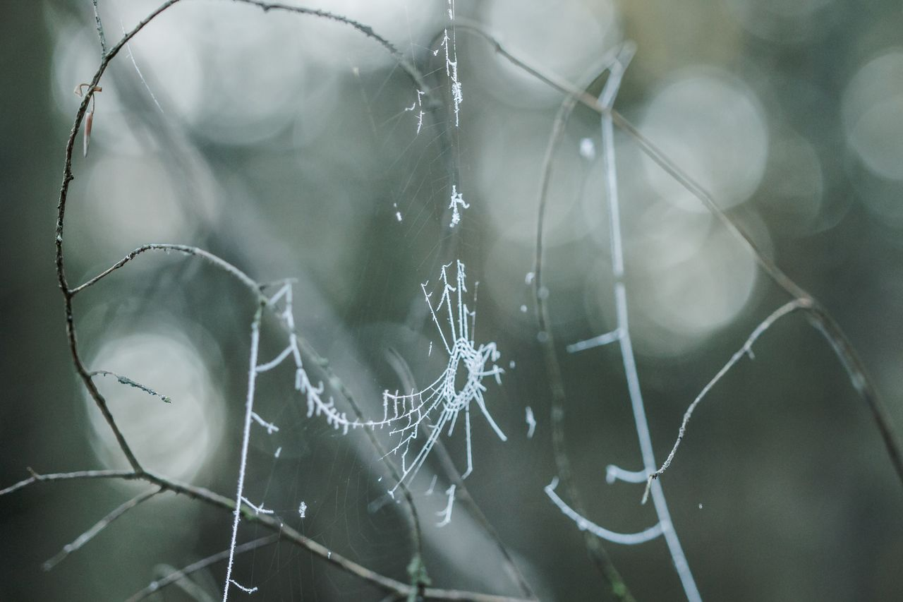 CLOSE-UP OF SPIDER WEB ON WATER