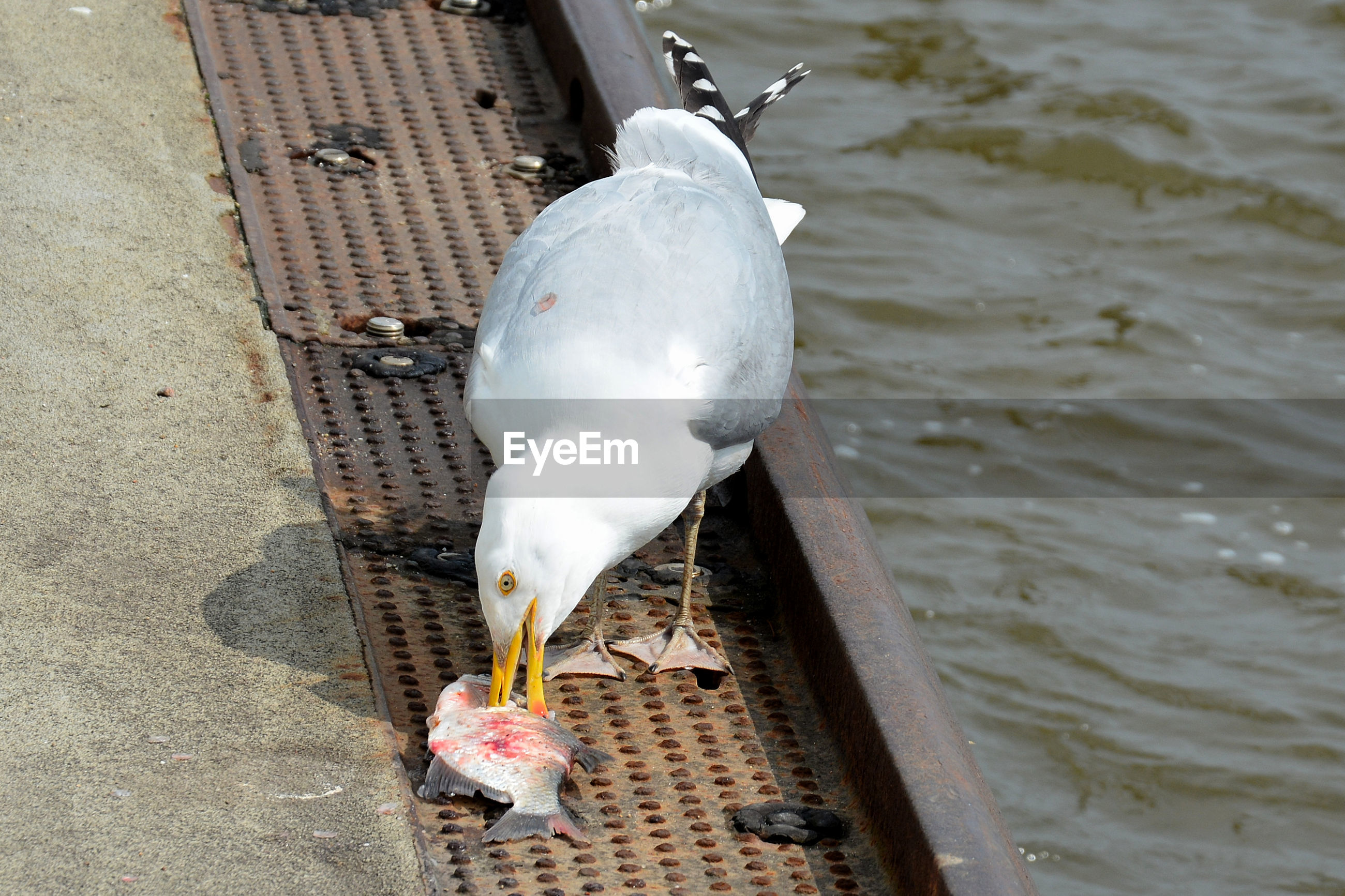 HIGH ANGLE VIEW OF SEAGULL ON SHORE