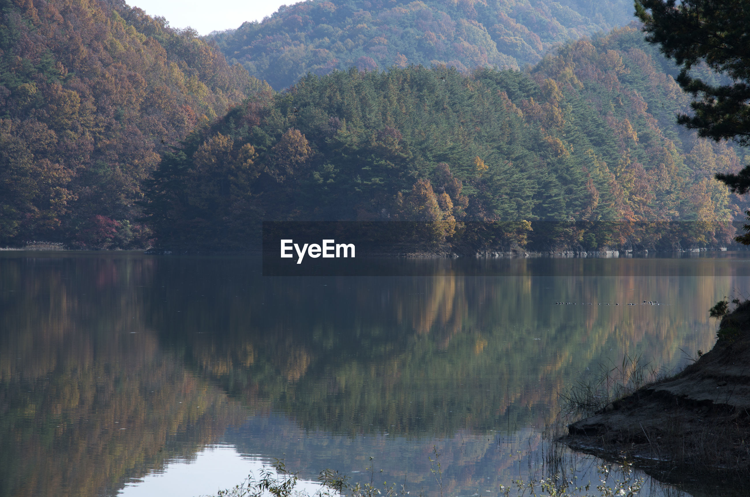Scenic view of lake by forest against clear sky