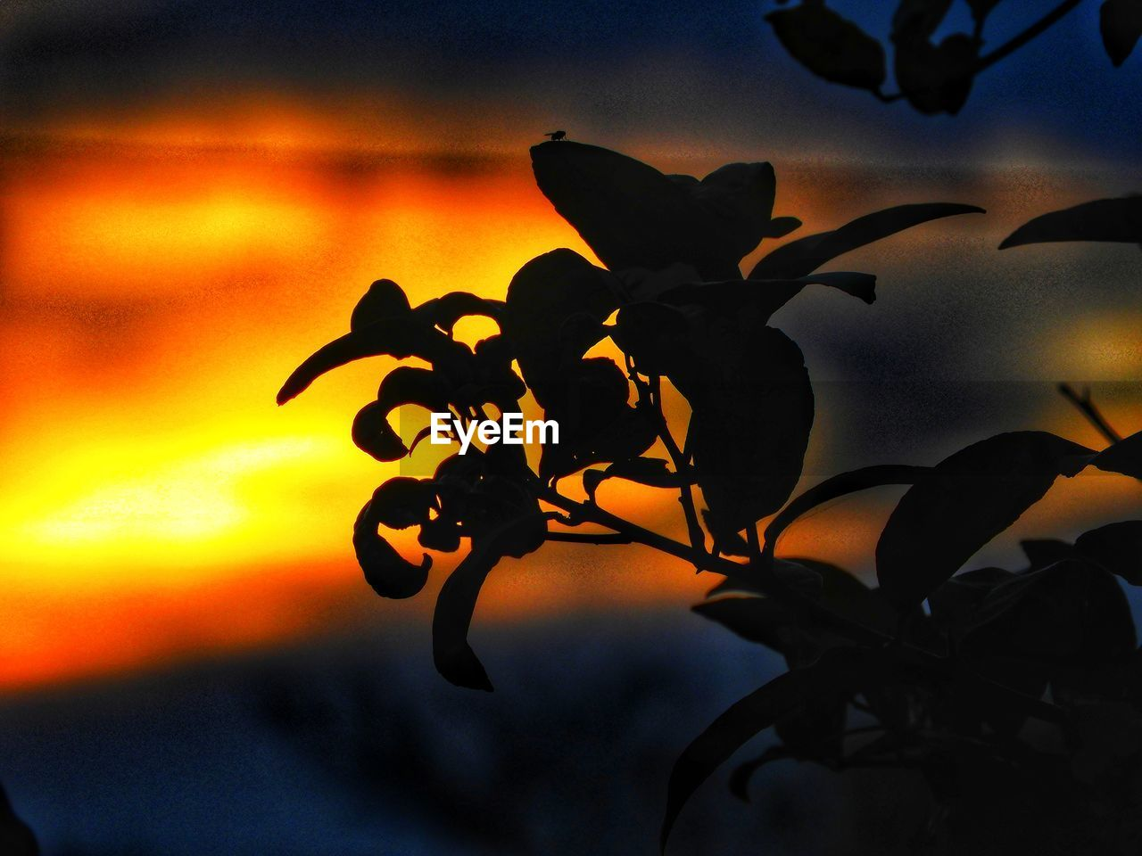 sunset, nature, silhouette, flower, beauty in nature, orange color, sky, close-up, outdoors, leaf, no people, cloud - sky, growth, tree, plant, yellow, scenics, branch, night, flower head, fragility, freshness