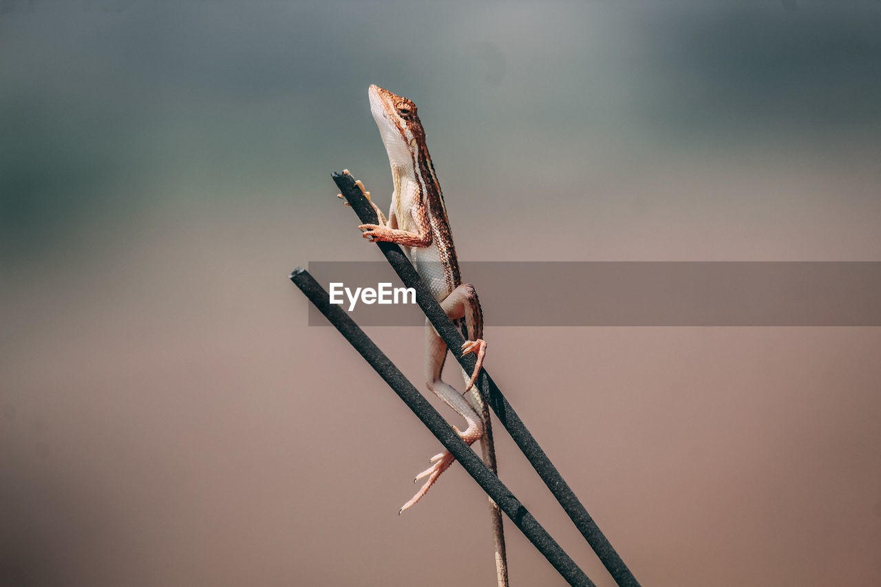 Low angle view of lizard on twigs