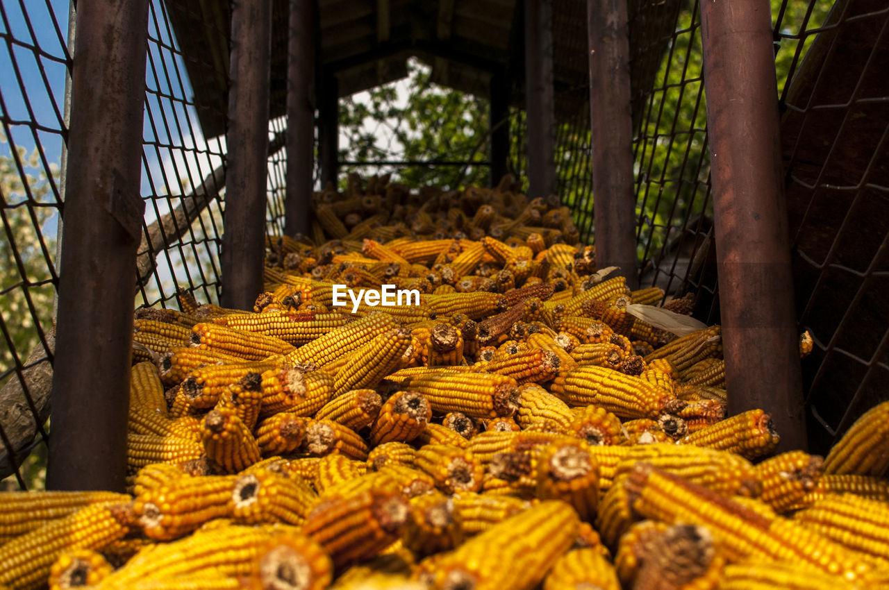 Close-up of sweetcorn