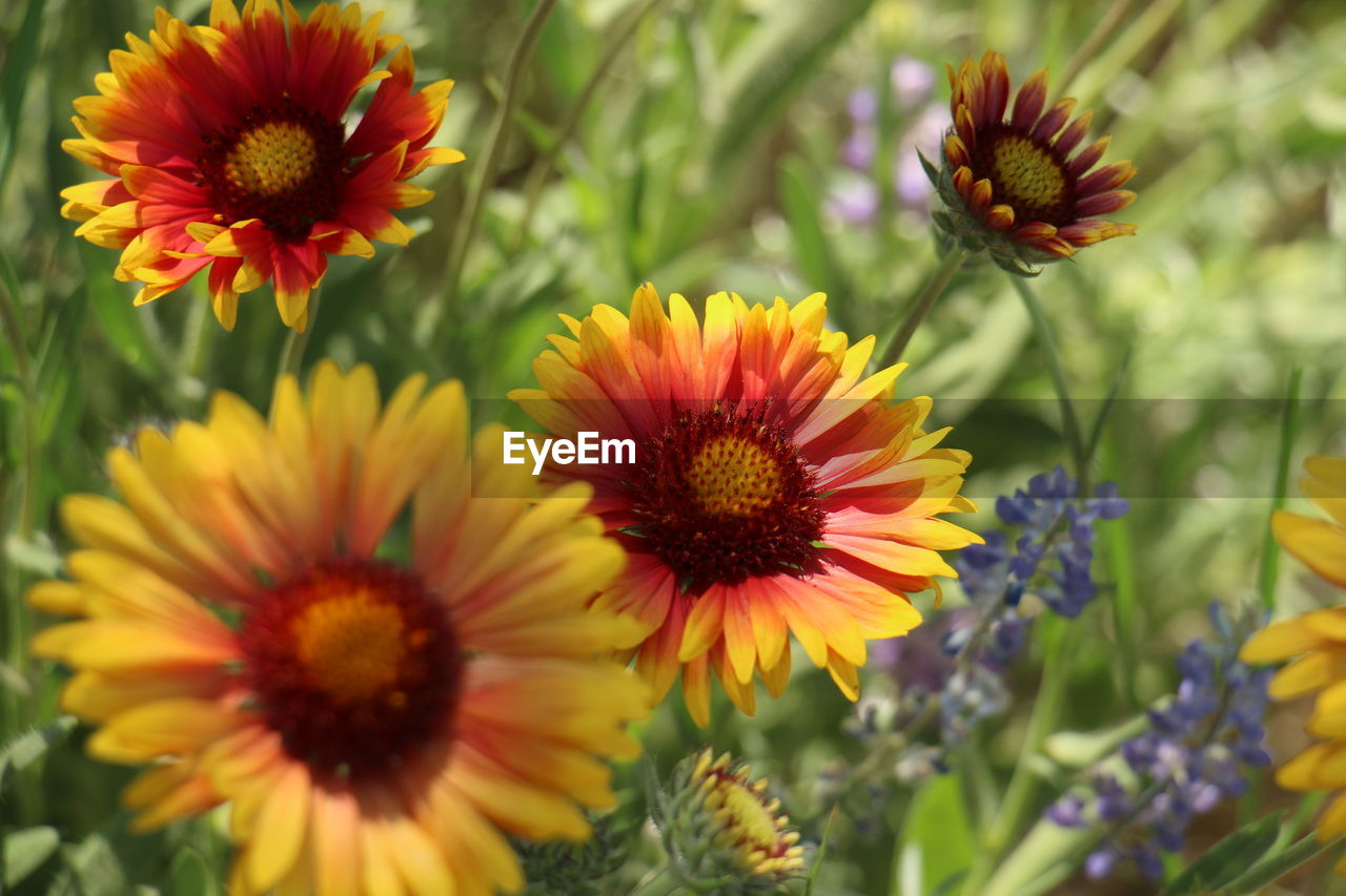 flowering plant, flower, fragility, vulnerability, plant, beauty in nature, petal, freshness, flower head, growth, inflorescence, close-up, no people, nature, focus on foreground, pollen, day, yellow, outdoors, selective focus, gazania