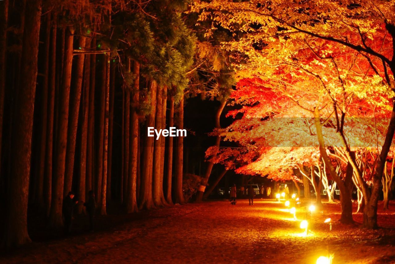 tree, illuminated, night, plant, no people, nature, direction, orange color, tree trunk, the way forward, outdoors, trunk, autumn, land, forest, street, light - natural phenomenon, glowing, growth, lighting equipment, change, light