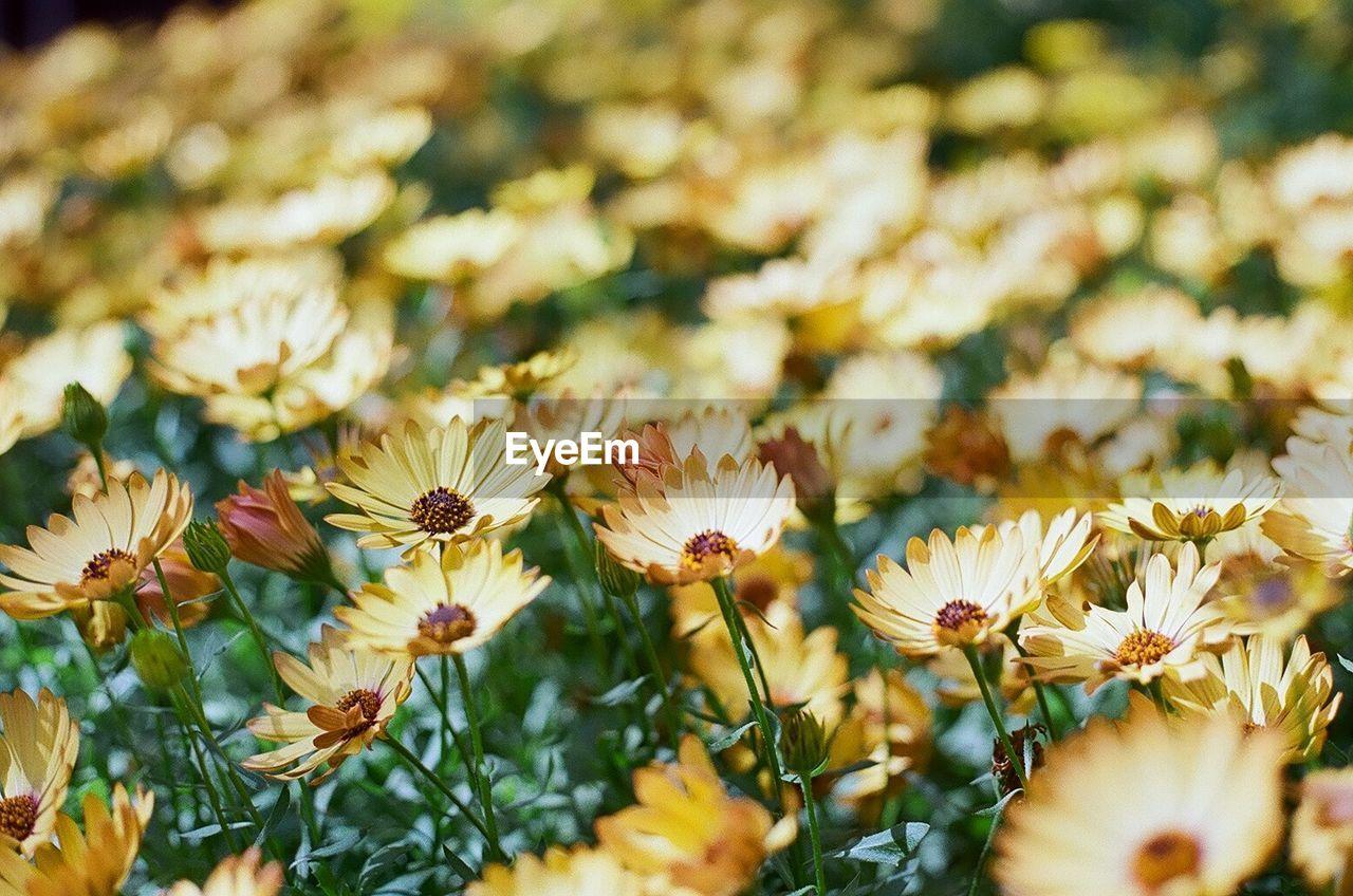 Detail shot of yellow flowers