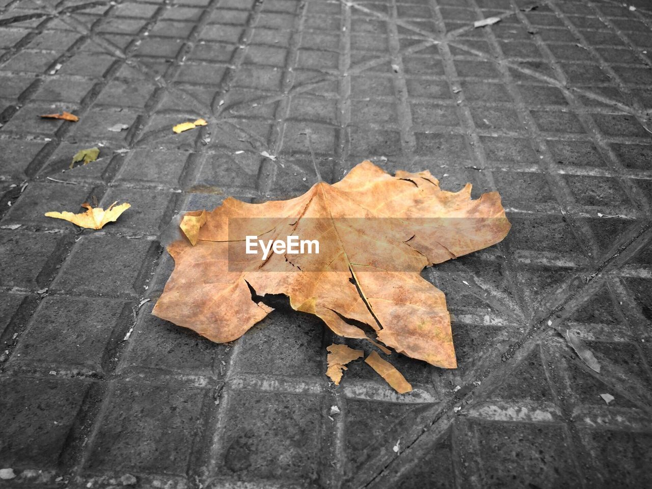 autumn, leaf, change, dry, leaves, maple, maple leaf, fallen, outdoors, day, nature, high angle view, no people, street, fragility, beauty in nature, close-up