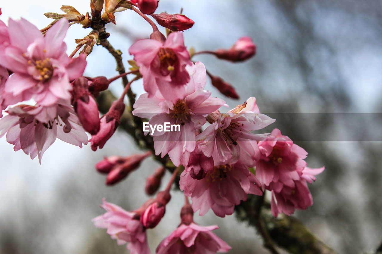 flower, fragility, pink color, beauty in nature, growth, nature, freshness, petal, tree, springtime, blossom, close-up, day, no people, botany, focus on foreground, branch, flower head, outdoors, twig, stamen, blooming