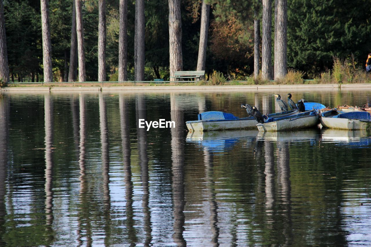 water, tree, nautical vessel, transportation, reflection, plant, lake, mode of transportation, day, waterfront, nature, forest, no people, tranquility, outdoors, beauty in nature, moored, non-urban scene, inflatable