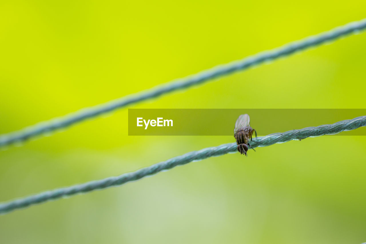 focus on foreground, animal, animal themes, animals in the wild, animal wildlife, one animal, no people, wire, close-up, invertebrate, plant, nature, day, green color, barbed wire, protection, safety, insect, fence, security, outdoors, animal wing
