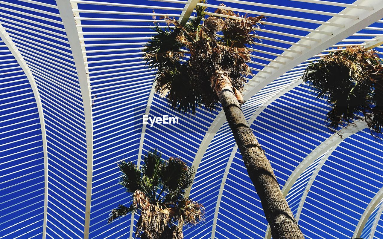 palm tree, plant, tropical climate, tree, low angle view, growth, no people, nature, day, tree trunk, built structure, trunk, architecture, outdoors, coconut palm tree, blue, sky, palm leaf, building exterior, sunlight, tropical tree, ceiling