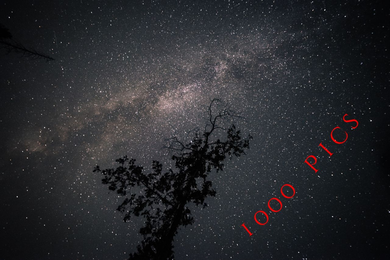 night, text, space, astronomy, star - space, western script, no people, galaxy, communication, nature, tree, sky, outdoors, star, red, beauty in nature, star field, black color, milky way, plant, message, new year's eve
