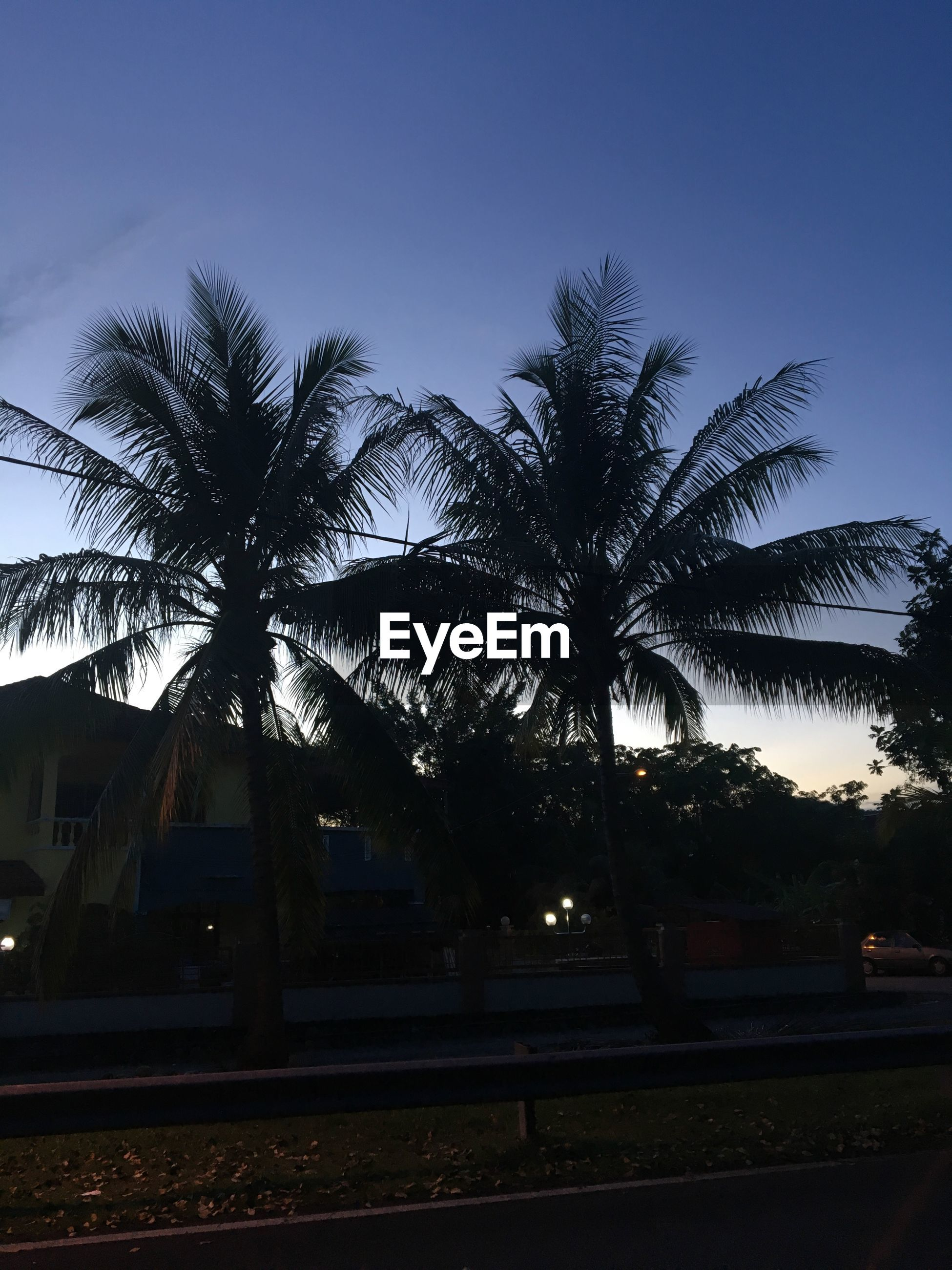 palm tree, tree, sky, clear sky, no people, outdoors, nature, beauty in nature, day