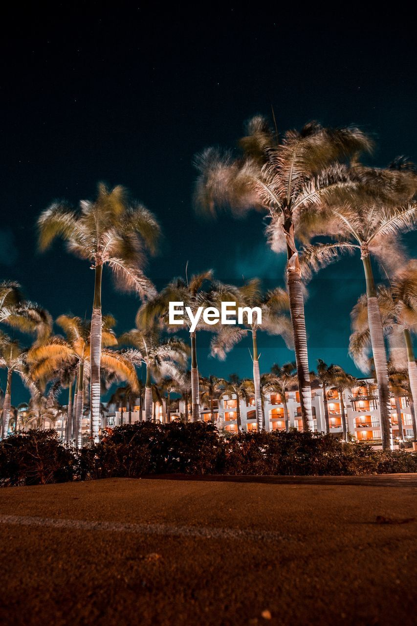 Low angle view of palm trees by illuminated building against sky at night