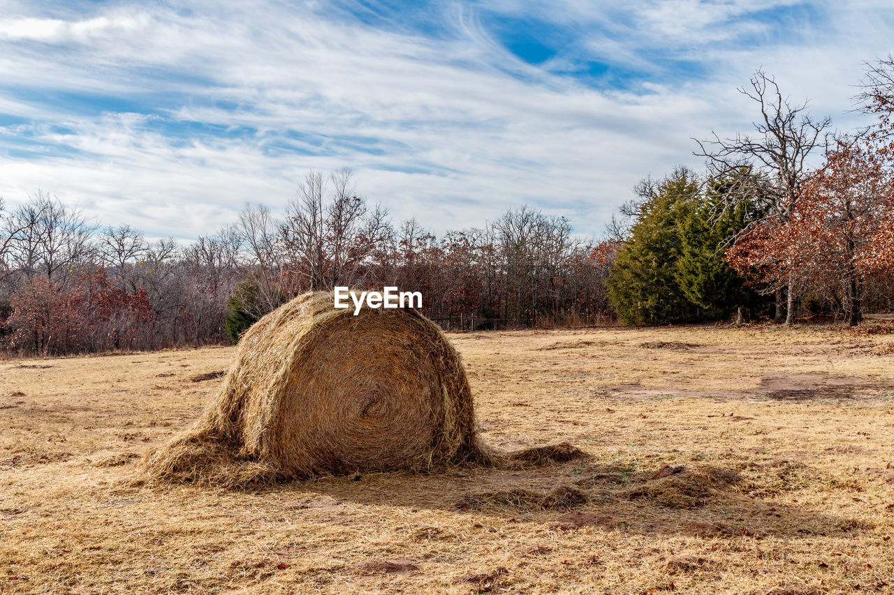 bale, field, hay, hay bale, agriculture, sky, tranquility, tree, cloud - sky, nature, haystack, tranquil scene, day, no people, rural scene, outdoors, landscape, beauty in nature