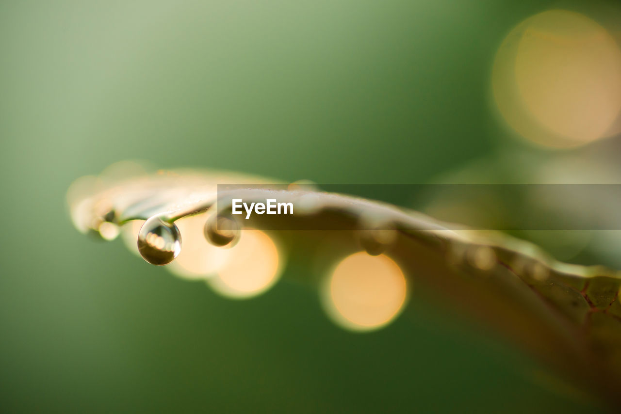 selective focus, close-up, plant, no people, drop, nature, beauty in nature, green color, water, focus on foreground, fragility, growth, vulnerability, wet, leaf, plant part, day, outdoors, freshness, purity, dew, blade of grass, raindrop