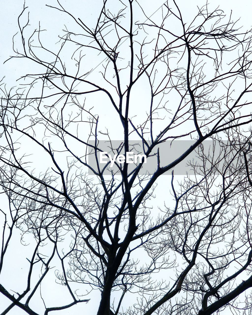 bare tree, branch, low angle view, tree, nature, beauty in nature, day, sky, outdoors, no people, tranquility, clear sky