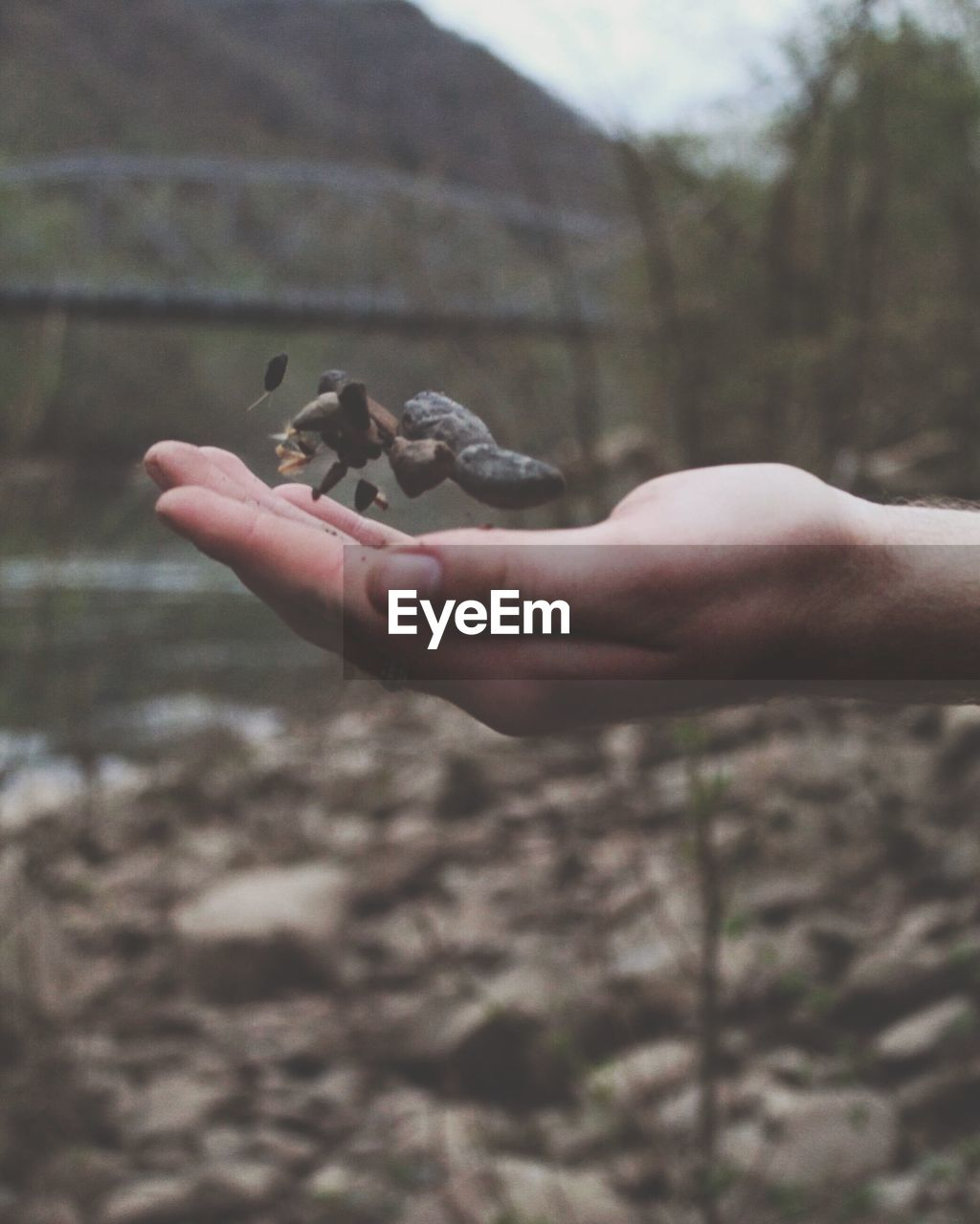human hand, hand, real people, human body part, one animal, one person, focus on foreground, nature, day, animal wildlife, land, vertebrate, holding, finger, human finger, outdoors, animals in the wild