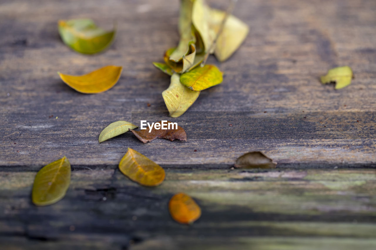 leaf, plant part, selective focus, wood - material, still life, table, food, food and drink, close-up, no people, leaves, autumn, yellow, day, dry, healthy eating, fruit, nature, change, nut, natural condition