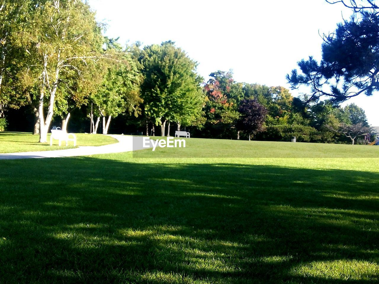 tree, grass, golf, golf course, sunlight, growth, green - golf course, green color, nature, beauty in nature, lawn, shadow, day, tranquility, sport, no people, outdoors, scenics, clear sky, sky, golfer