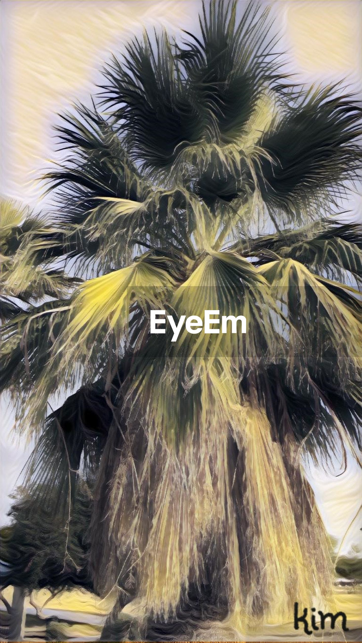 palm tree, low angle view, no people, outdoors, day, close-up, nature, sky