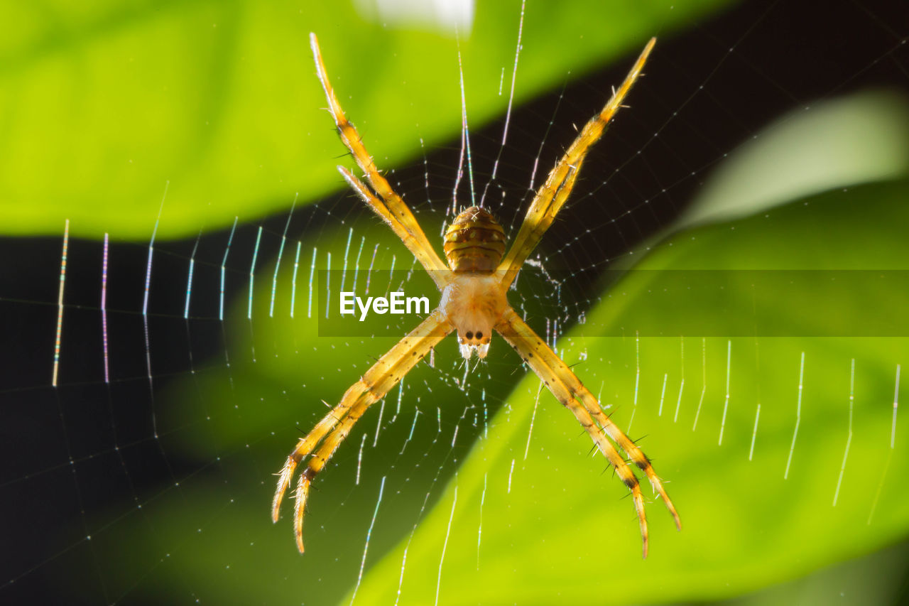 animal themes, animal wildlife, animal, invertebrate, insect, animals in the wild, one animal, spider web, close-up, fragility, spider, arachnid, arthropod, focus on foreground, nature, vulnerability, animal body part, no people, green color, day, outdoors, animal leg, web