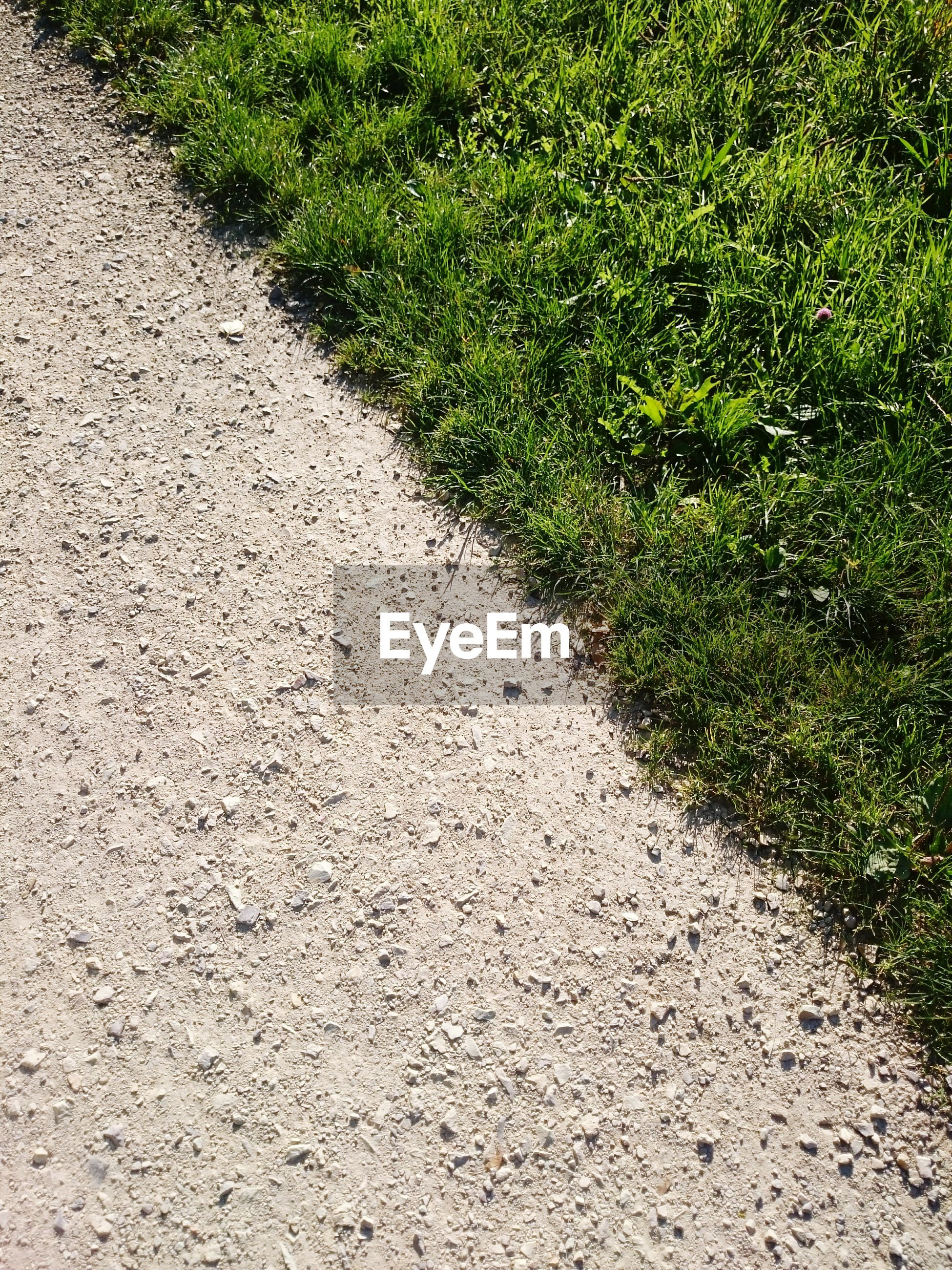 High angle view of dirt road by green grass