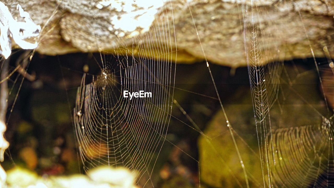 spider web, web, close-up, spider, focus on foreground, fragility, no people, nature, outdoors, day, weaving, animal themes