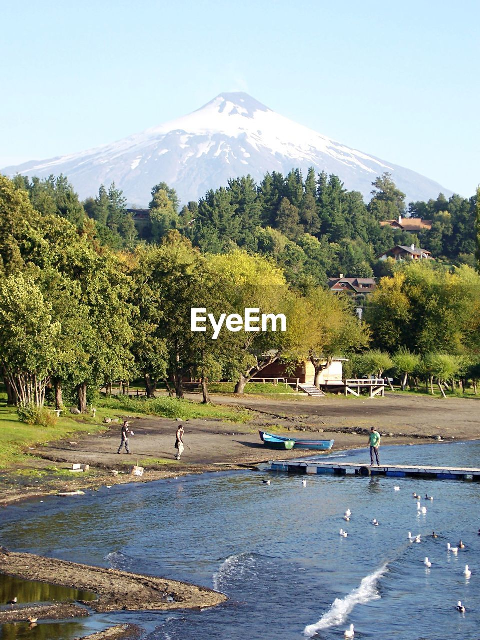 Trees On Field Amidst Lake And Villarrica Mountain