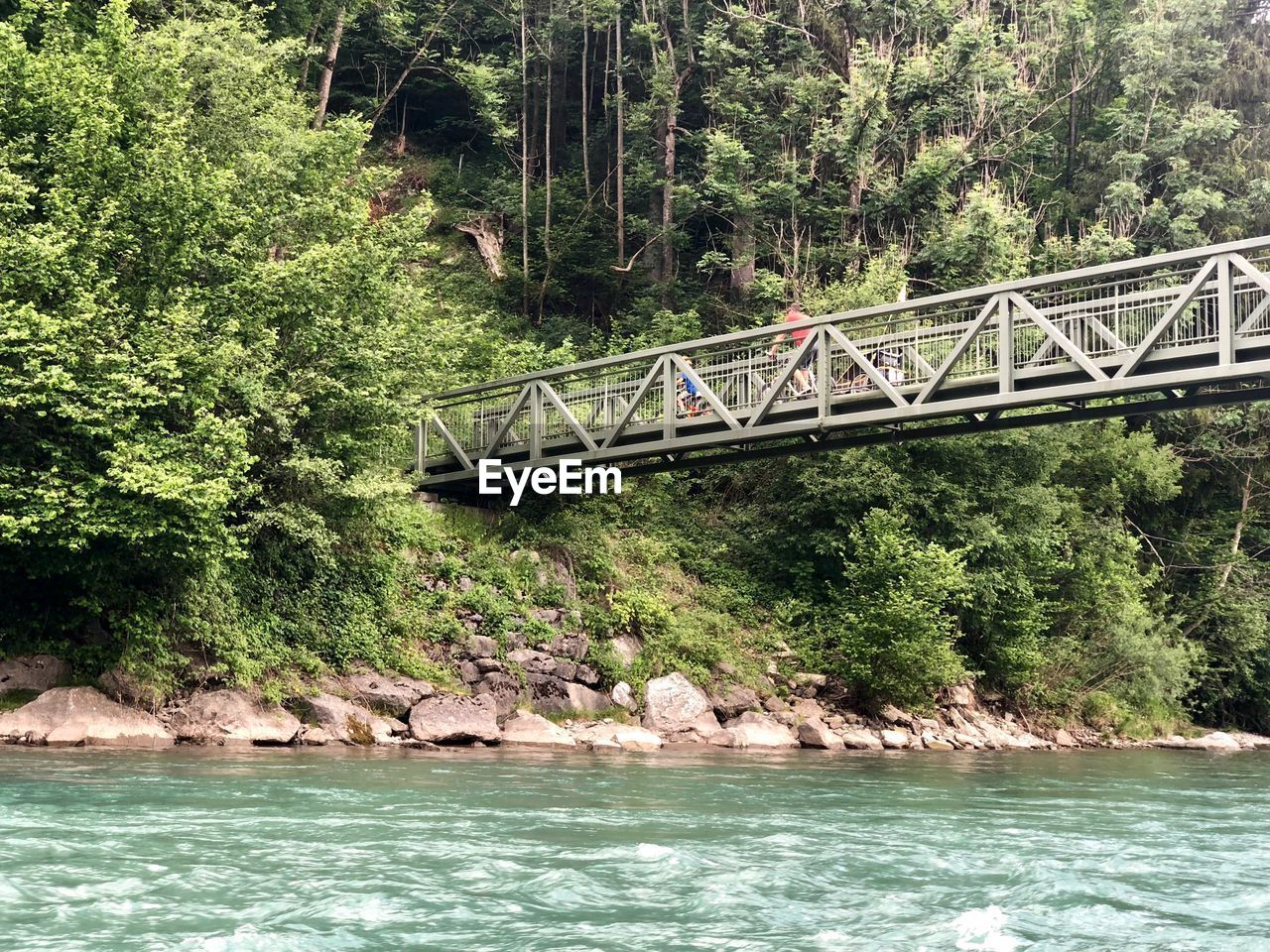 tree, water, plant, architecture, built structure, transportation, connection, forest, bridge, nature, day, bridge - man made structure, growth, river, no people, beauty in nature, land, waterfront, non-urban scene, outdoors