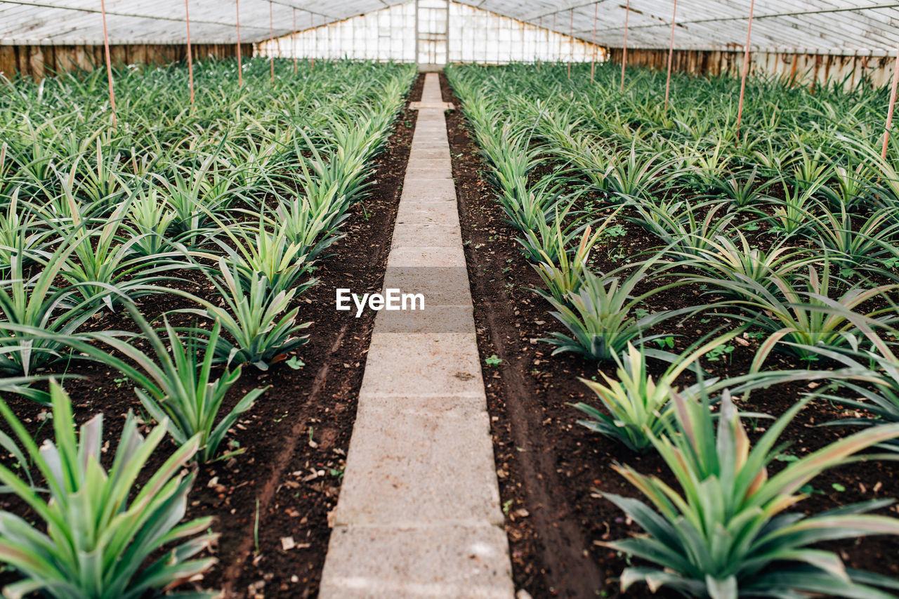 Plants Growing In Greenhousse