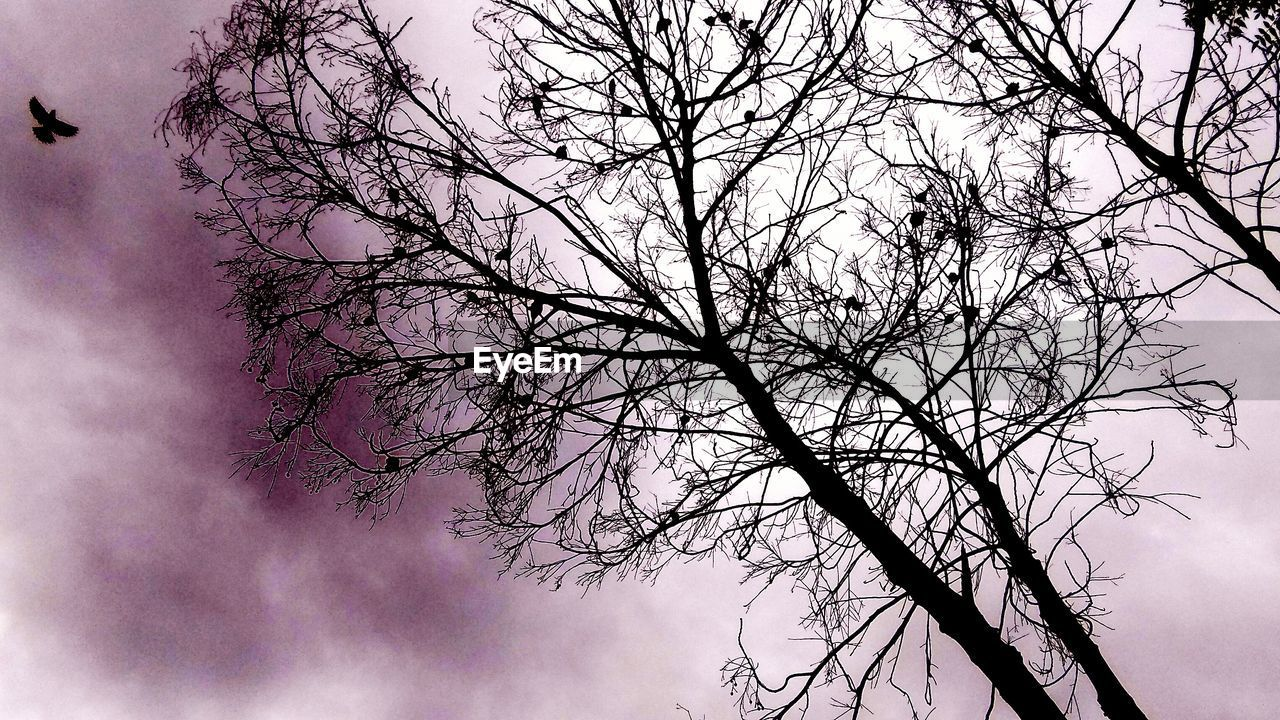 tree, branch, low angle view, beauty in nature, nature, sky, bare tree, no people, outdoors, growth, tranquility, day, scenics, flower, fragility, freshness