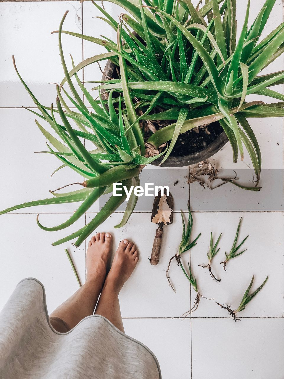 one person, human body part, low section, plant, body part, real people, green color, human leg, nature, lifestyles, indoors, leaf, plant part, personal perspective, high angle view, growth, women, potted plant, barefoot, human foot, human limb