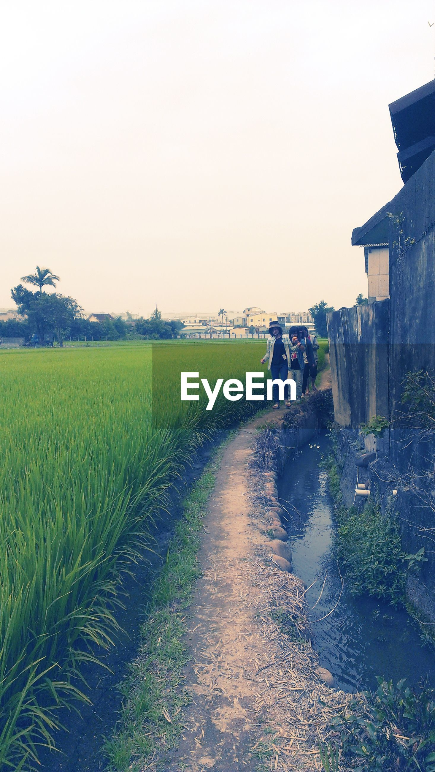clear sky, grass, field, copy space, rural scene, building exterior, landscape, agriculture, the way forward, sky, built structure, dirt road, nature, walking, tranquil scene, tranquility, architecture, farm