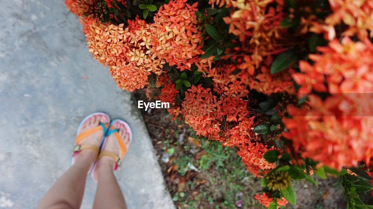 Low Section Of Woman Standing By Ixora Plant