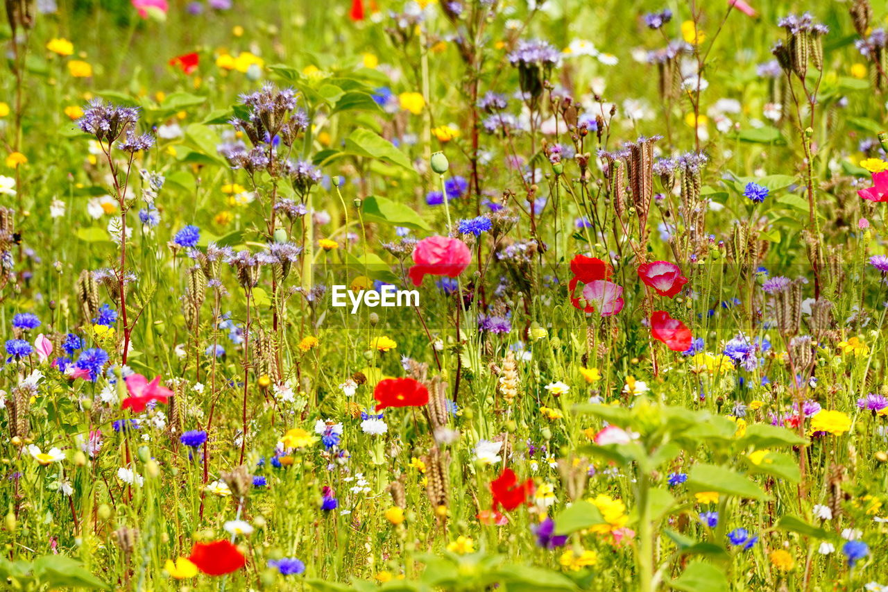 flower, flowering plant, plant, multi colored, beauty in nature, green color, nature, freshness, selective focus, fragility, vulnerability, growth, grass, no people, yellow, backgrounds, field, full frame, outdoors, flowerbed, flower head, ornamental garden, springtime, purple, bright