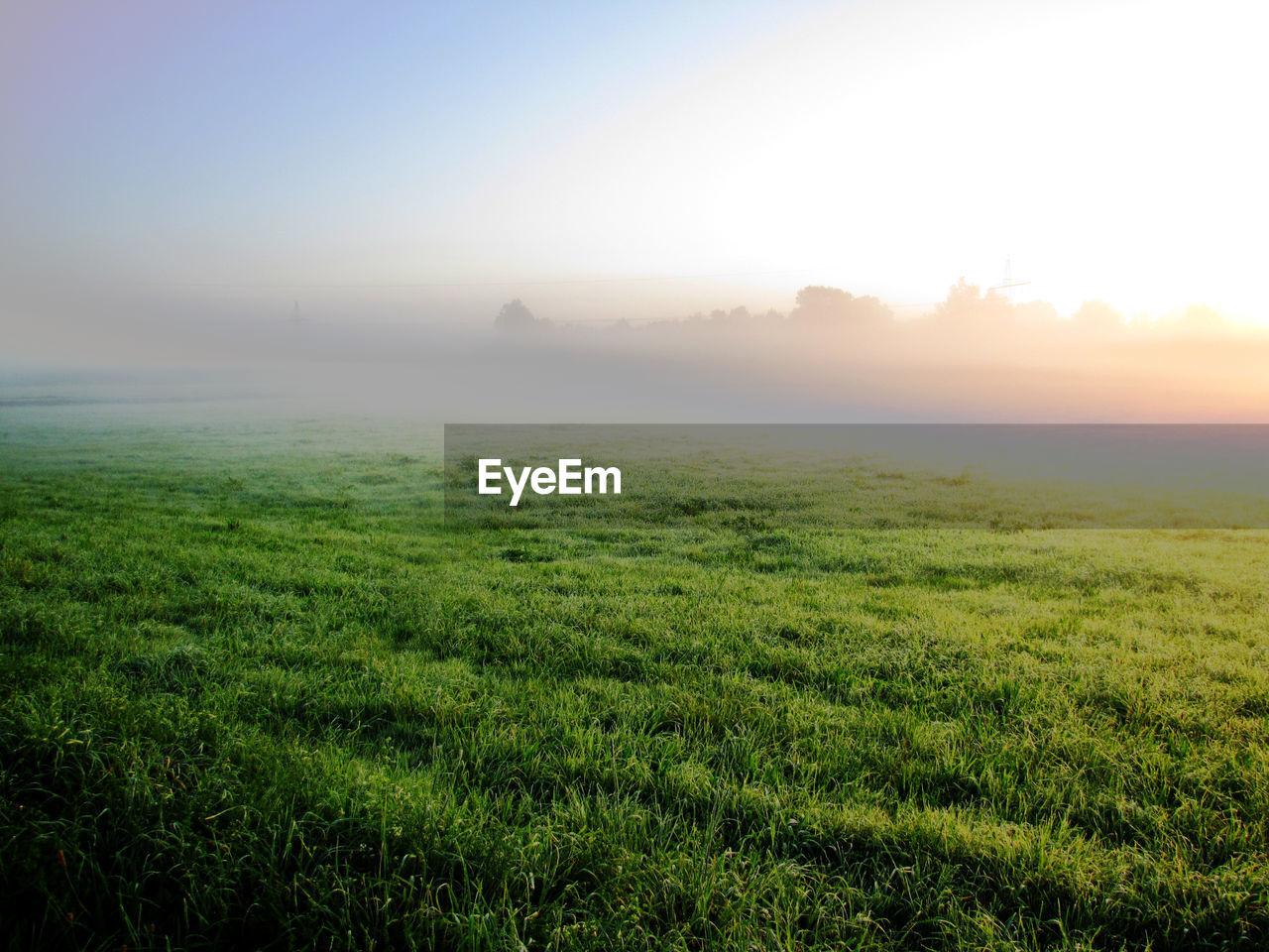 Grassy field against sky during sunrise