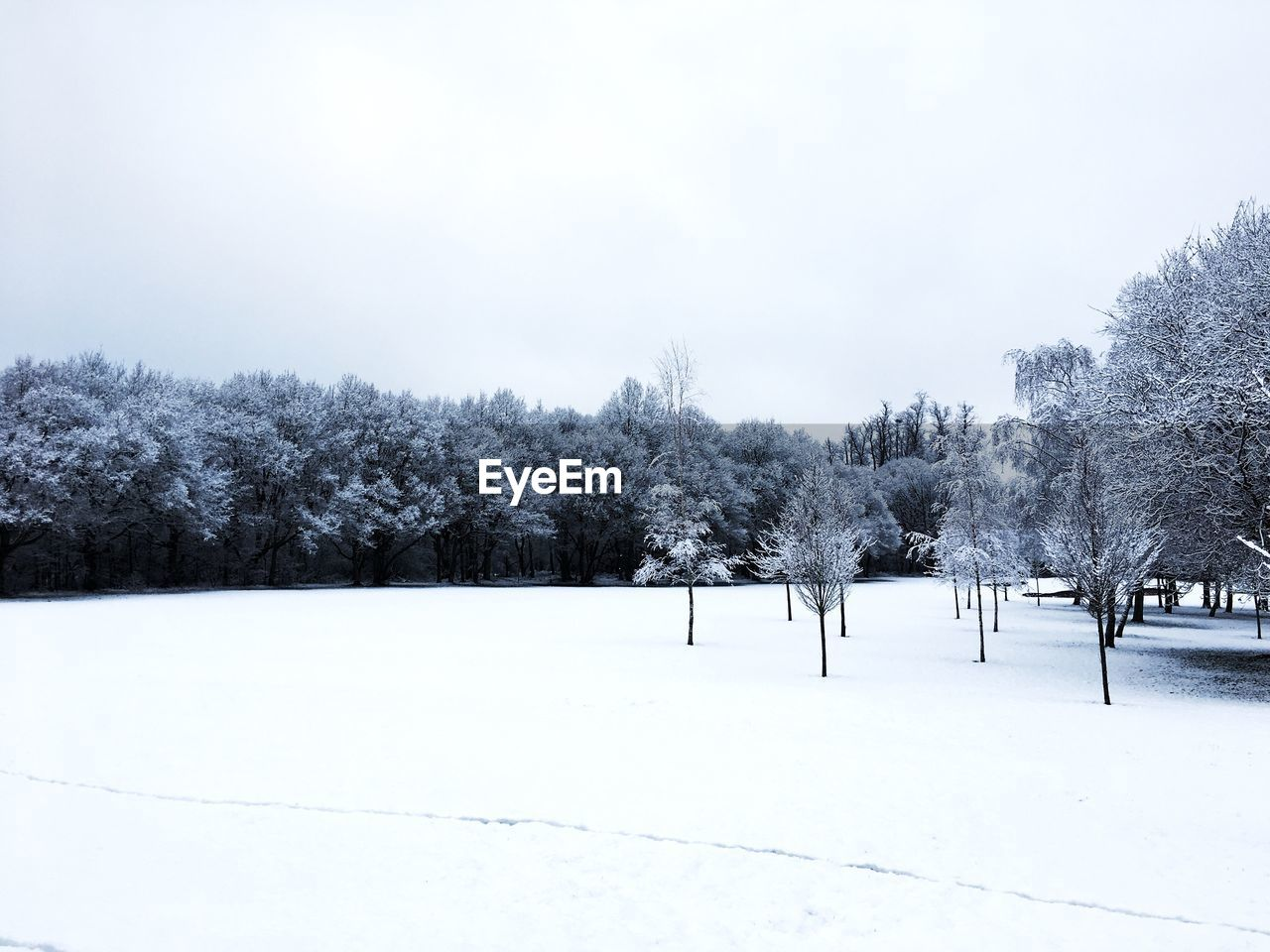 snow, winter, cold temperature, tree, plant, sky, beauty in nature, white color, nature, tranquility, landscape, scenics - nature, environment, day, no people, tranquil scene, field, land, covering, outdoors, snowing