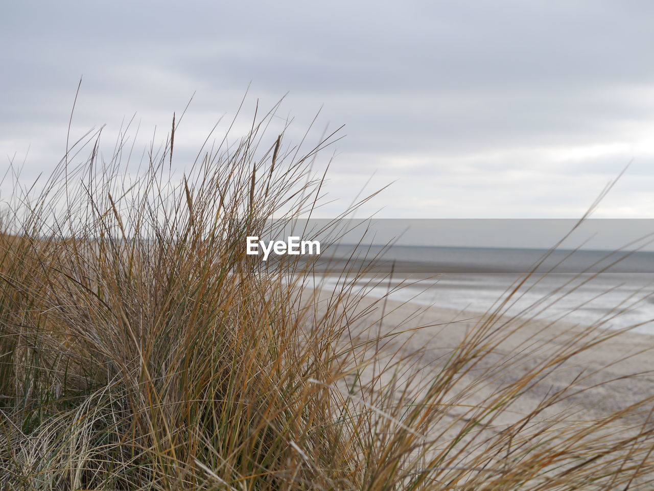 sky, water, sea, tranquility, beauty in nature, beach, cloud - sky, plant, grass, land, horizon over water, nature, scenics - nature, tranquil scene, growth, no people, horizon, marram grass, sand, outdoors, timothy grass